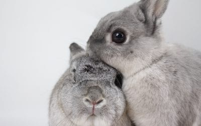 Promote Your Business' Cruelty Free Message with The Right PR Agency