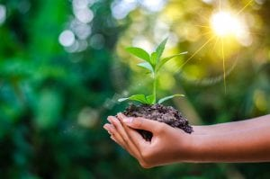 Hands-holding-seedling-environmental-photo