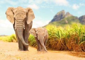 elephant-baby-elephant-walking-in-wild