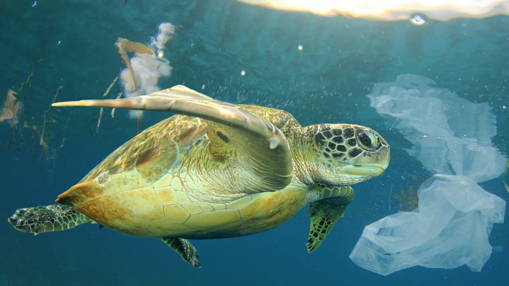 Sea-turtle-swimming-through-polluted-ocean-and-plastic