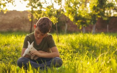 Animal Welfare Awareness is Growing. Here's How to Make the Most of it.