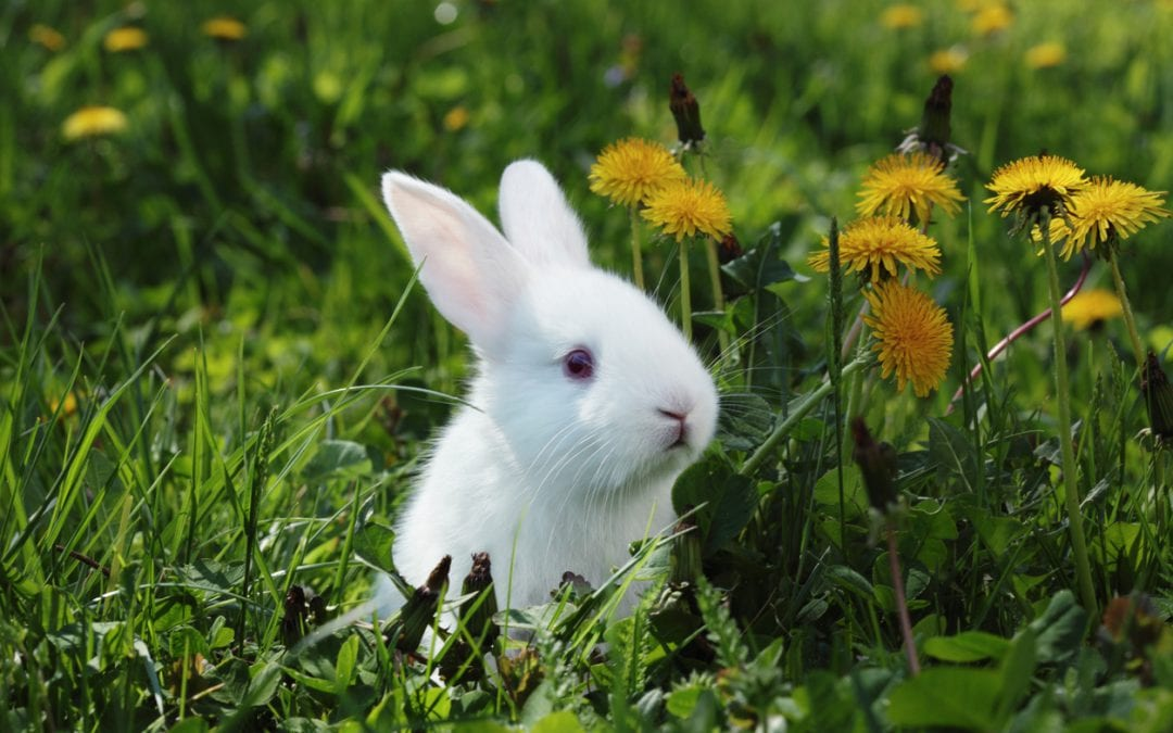 Virginia May Go Cruelty Free — Will You?
