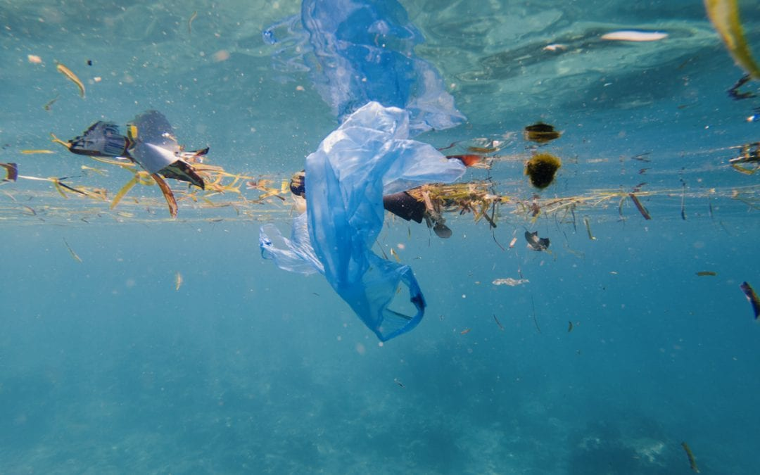 Microplastics: The invisible threat in our hometown