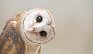 Owl with tilted head wonders why fun is more important than animal welfare