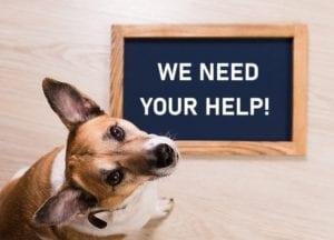 Dog helping an animal welfare foundation ask for help