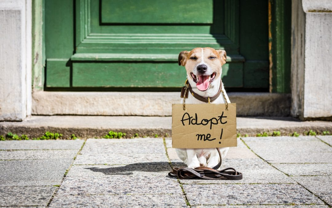 Promoting Animal Welfare Through a Social Media Strategy
