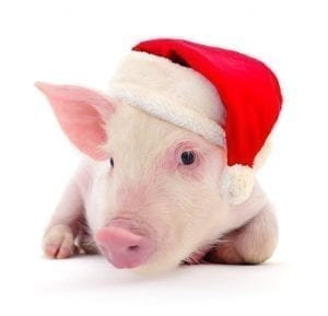 Pig in santa clause hat is happy about cruelty free products