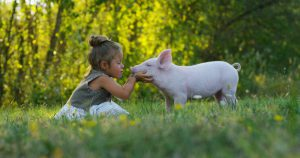 Cruelty free public relations can help build brand loyalty for your company