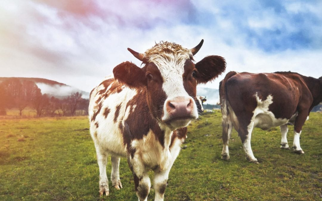 Cruelty-free closets: The market for animal-free alternatives to leather, wool and other materials is growing fast