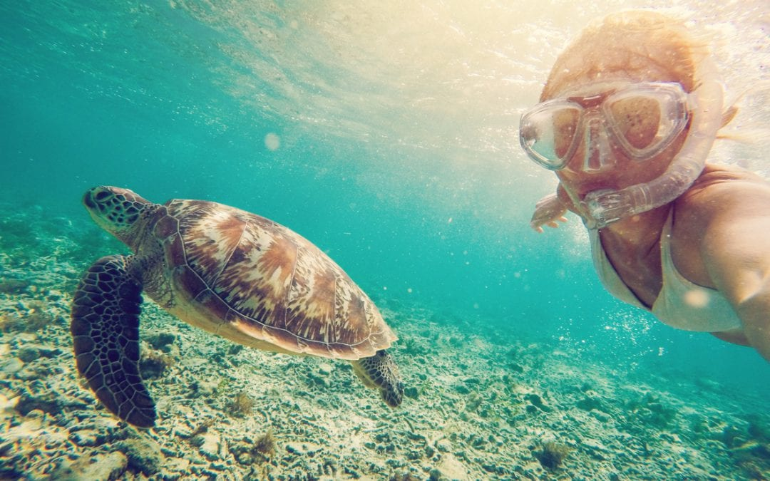 sea turtle, snorkling, orange orchard, public relations, social media, environmental public relations