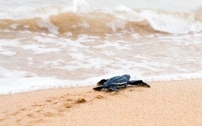 Ocean Conservation Public Relations Campaigns : How to Get Started