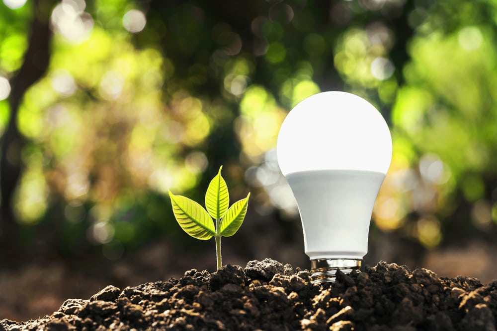 energy saving light bulb with plant sunshine concept