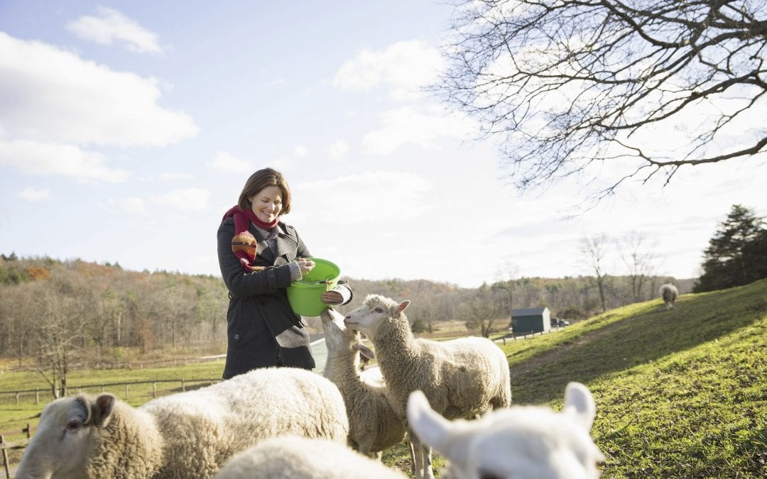 Building a Business Culture using Animal Welfare Public Relations