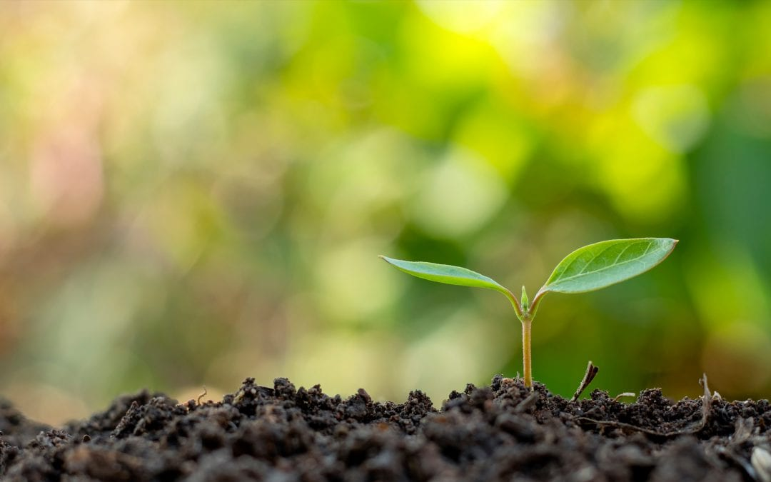 Grow Your Plant-Based Brand's SEO With Blogs