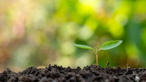 A tree's first sign of sprouting in fertile soil.