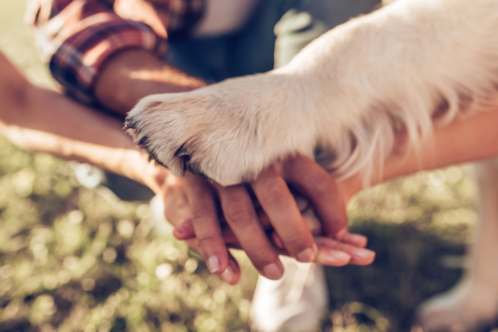 Public Relations Helps Your Animal Welfare Group Lead the Pack