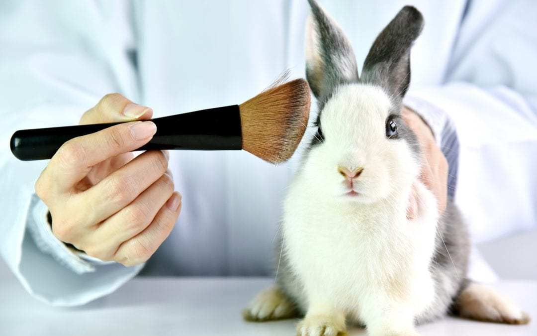 Rabbit animal testing