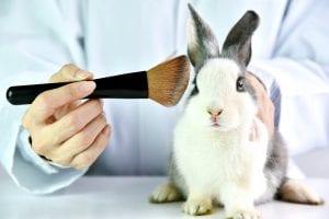 Rabbit animal testing